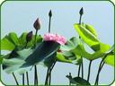 花卉绿植综合交流